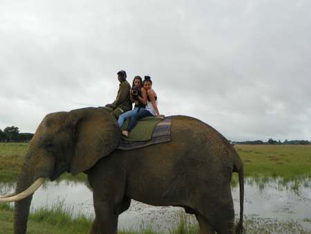 the game reserve: Elephant ride on game reserve