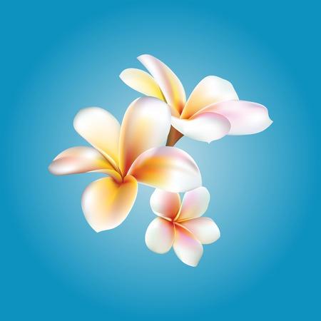 Plumeria. flower illustration Illustration