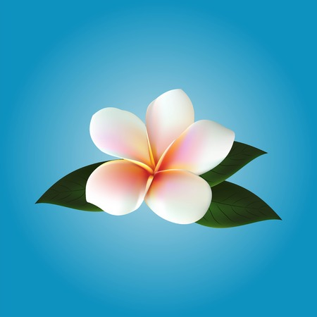 Plumeria. flower illustration Illustration