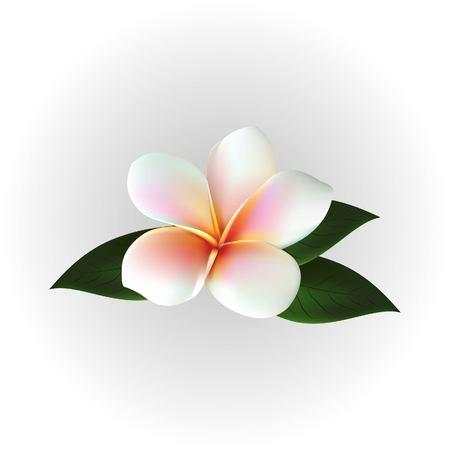 Vector floating flower. 向量圖像