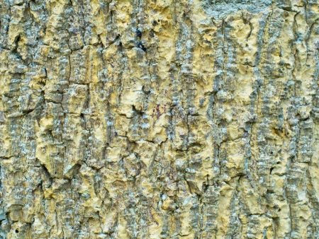 bark of a tree. seamless texture of bark Stock Photo - 23148935