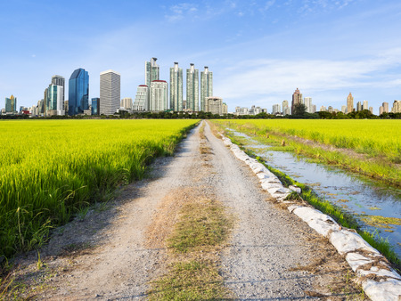 unpaved road: Unpaved Road to the city through the rice field