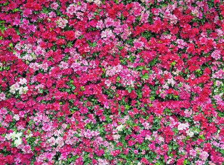 Frischmagentarote Blumen-Muster in senkrechten Wand