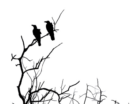 Silhouette branch of dead tree and crow isolated on white photo