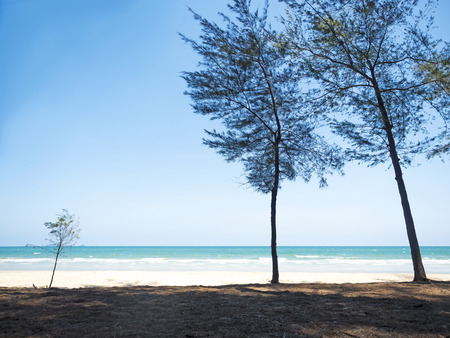 white sand: tree in front of the sea shore with white sand