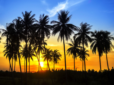 silhouette of coconut palm trees on colorful sun set