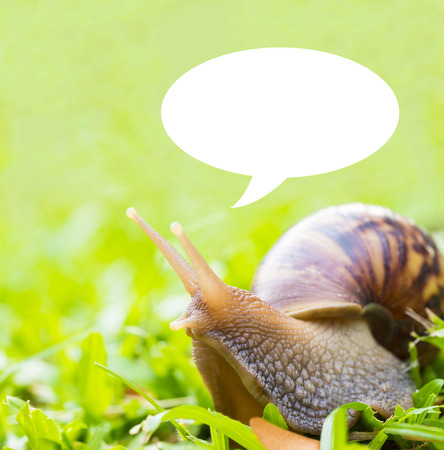 clam gardens: snail and message bubble on green glass background