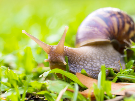 jhy: the snail  on green glass background