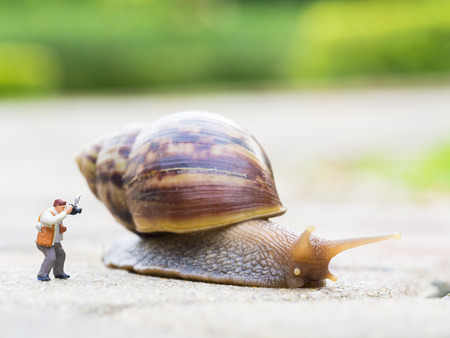 clam gardens: toy charactor in using camera action pointing to big snail in nature outdoor