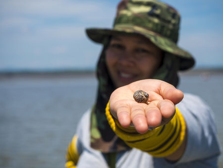 clam gardens: clam shell on womans hand in the outdoor location Stock Photo