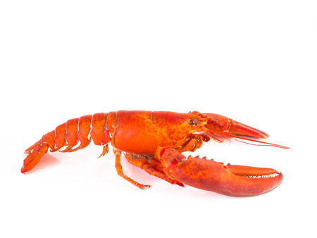 Steam Canadian lobster isolated on white background.