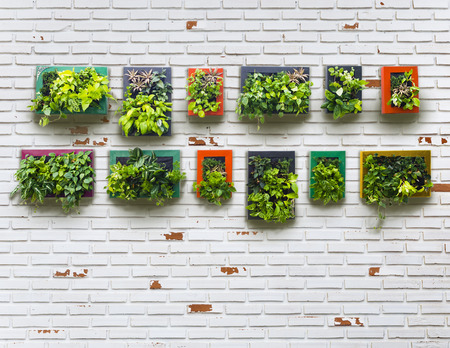 vertical garden on white brick wall, vintage style Stok Fotoğraf
