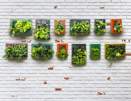 verticale tuin op witte bakstenen muur, vintage stijl Stockfoto