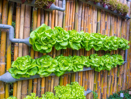 garden city: vegetable in decorated wall vertical garden Idea in the city