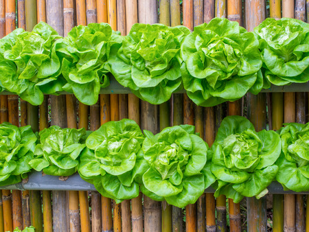 green plants: vegetable in decorated wall vertical garden Idea in the city