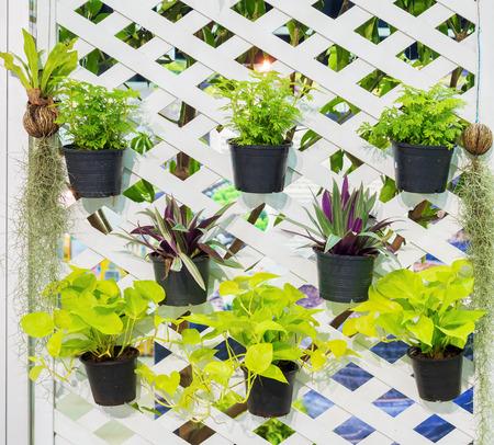 Muro decorado, Idea jardín vertical en la ciudad Foto de archivo - 49165518
