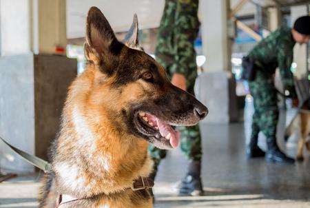 soldado: Los soldados y sus soldados perro en la ciudad Foto de archivo