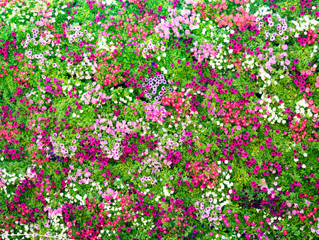 wedding backdrop: full decorated wall with the colorful fresh flowers in the outdoor park