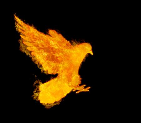 brandende vliegende duif vogel in actie geïsoleerd op zwarte achtergrond