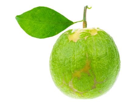focus stacking: raw green fruit, Madarin citus on white background, stacking focus added