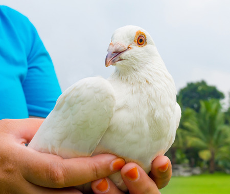 beak doves: white pigeon on woman hand and ready to go outdoor