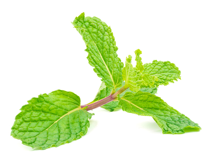close up shot on herbal mint leaf isolated on white background, stacking focus added