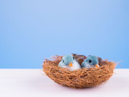 cute couple love birds in the nets on blue background Stock Photo