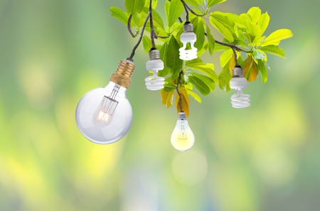 light bulb glowing on Pong-pong or Othalanga tree with leaves on nature background, go green concept Stock Photo