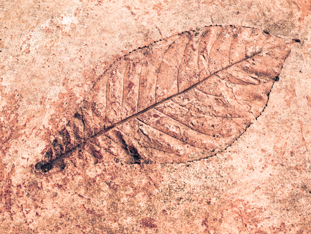 Tree leaf of tropical plant in printed on concrete surface, vacation and relaxation concept: small leaves greeting card design decoration backdrop idea