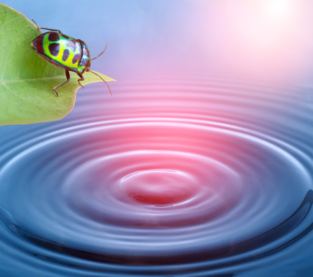 ladybug: bug life and fresh water with wave pattern, go green concept