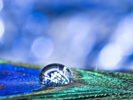 macro shot of water drop on the poultry feather, Beautiful light and blurred soft background in colorful shade. Stock Photo