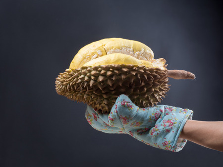 close up shot on durian, sweet king of fruits on dark background,  vegetable for diet with nutrition ingredient concept.