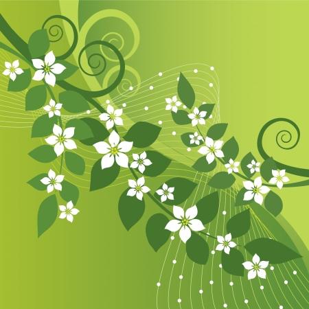 floração: Flores de jasmim bonitas e redemoinhos verdes sobre fundo verde Ilustração