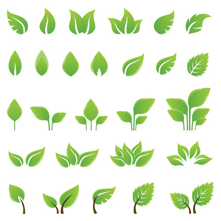 Set of green leaves design elements. This image is a vector illustration.