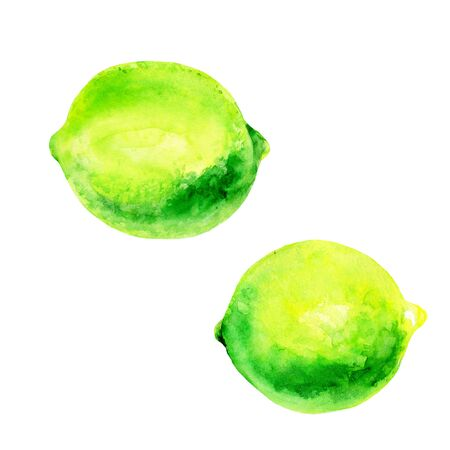 Watercolor lime set juicy fruit and lime slice isolated on white background. Hand painted food illustration Design. Healthy vegan food. Can be used as greeting card for birthday, wedding, healthy