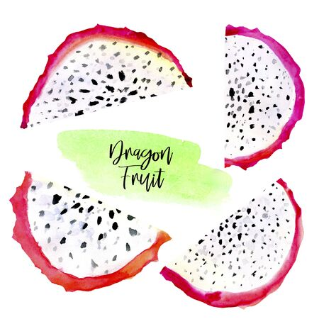 Hand drawn watercolor illustrations of dragon fruits pitaya slice isolated on white background. Pitahaya. Summer food illustration, tropical fruit. Healthy life style painting. Hand drawn clip art