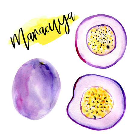 Marakuay Hand drawn watercolor illustrations of passion fruit isolated. Summer food illustration, tropical fruit. Healthy life style painting. Hand drawn clip art
