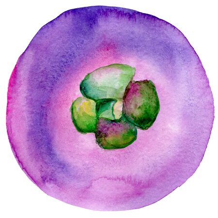 Mangosteen hand drawn watercolor illustrations isolated. Mangosteen watercolor exotic fruit. Summer food illustration, tropical fruit. Healthy life style painting. Hand drawn clip art sketch. Organic