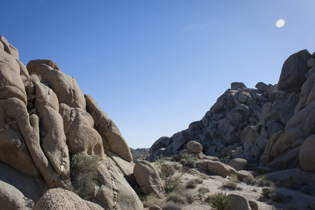 joshua tree national park: Joshua Tree National Park