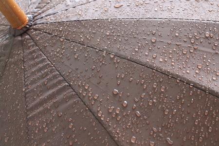 rain drop: rain drop on dark brown umbrella