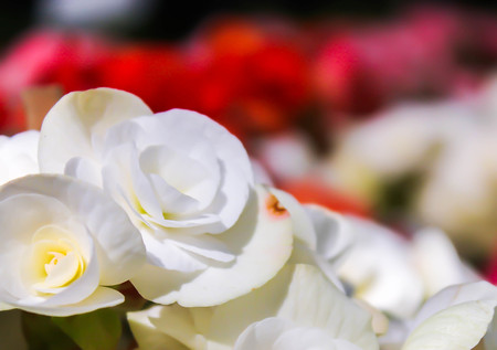 spacial: Close up of white flowers