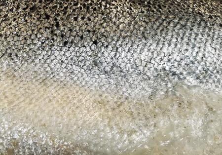 Texture of salmon skin Foto de archivo