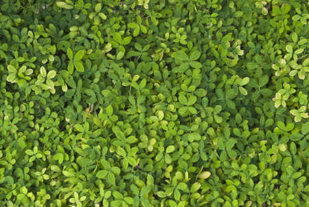 ground cover: Green leaves is ground cover.