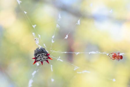 floridian: Spider