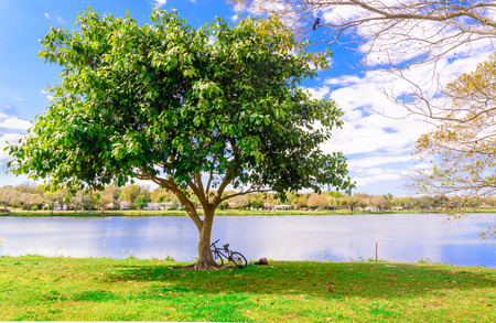lays down: A bicycle and a man lays down under the tree in the lake park
