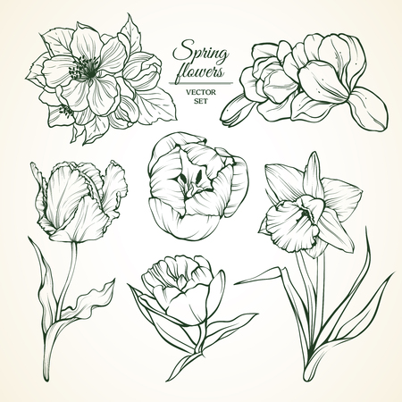 Set of spring flowers magnolia tulip daffodil blossom. Sketch vector illustration