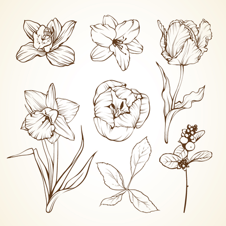 Set of flowers orchid lily tulip daffodil berries. Sketch vector illustration