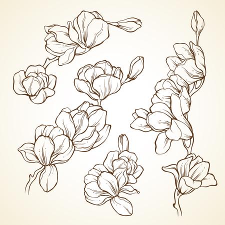 Set of flowers magnolia. Sketch vector illustration  イラスト・ベクター素材