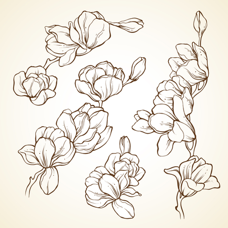 Set of flowers magnolia. Sketch vector illustration Illusztráció