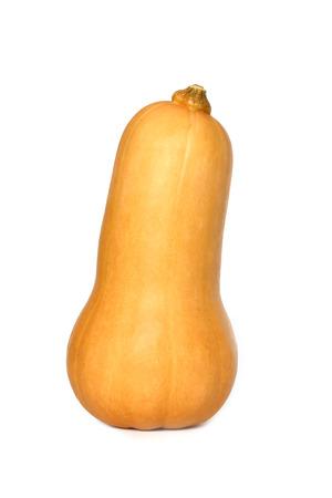 butternut: Single whole butternut squash - isolated